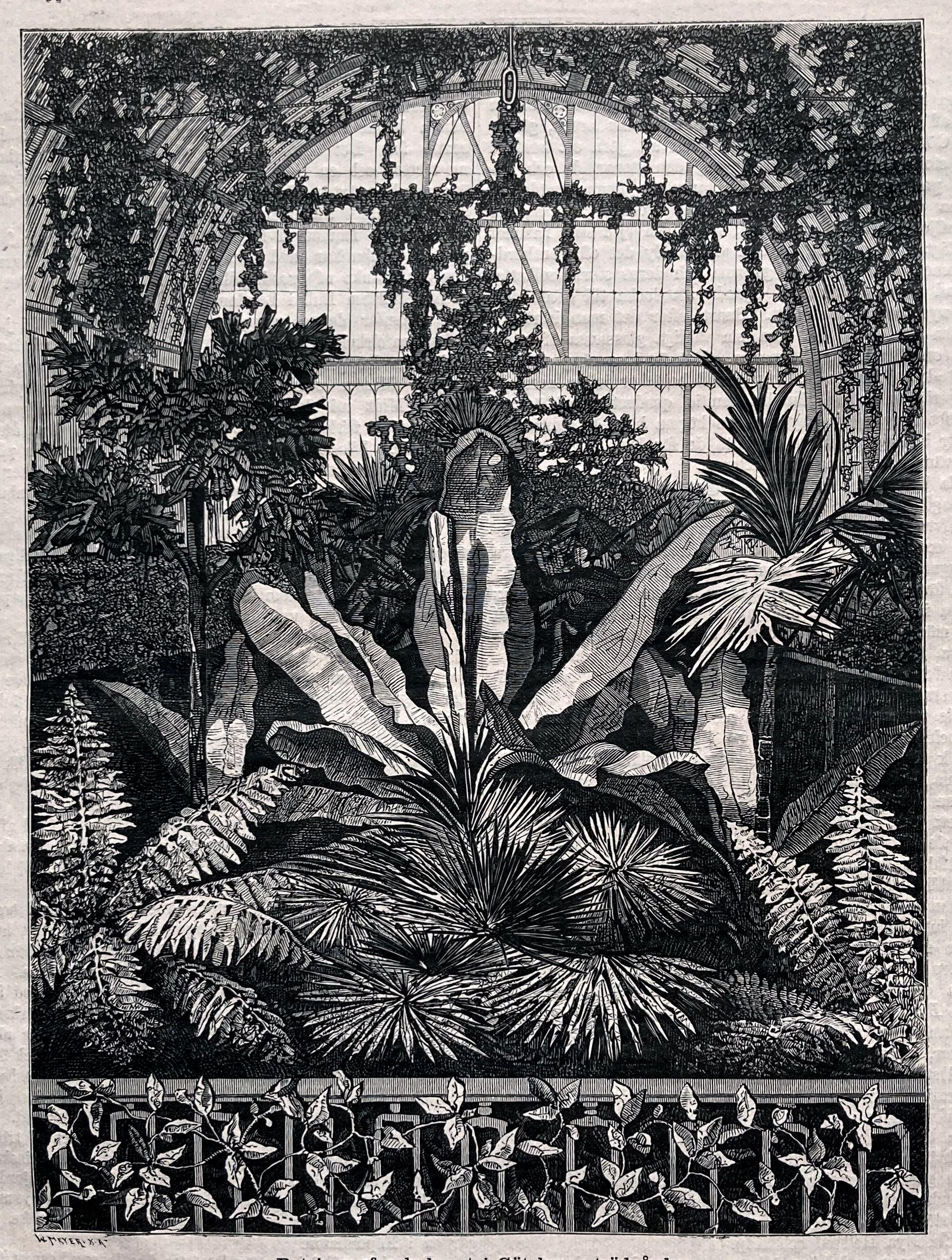 "O.L. Janssen, wood cut, 1880. ""Palmhuset i Göteborgs trädgård"""